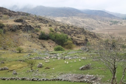 Kissane Mountain Sheep Farm ligt iets voorbij Moll's Gap