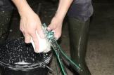Vervolgens reinigen we alle delen van het melkstel, zodat alles eens terug helemaal proper is.