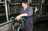 Wanneer alle 96 tepelvoeringen van de 24 melkstellen dan vervangen zijn, moet de volledige installatie nog eens gereinigd worden – automatisch zoals na elke melkbeurt – zodat alles vanbinnen toch zeker proper is.