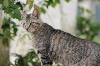 Kat in de jungle