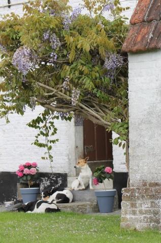Ook de hondjes genieten in de tuin!